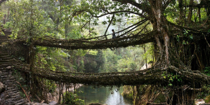 Amazing Bridges – Made Up With Live Root