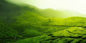 Ooty- Queen of Hill Stations