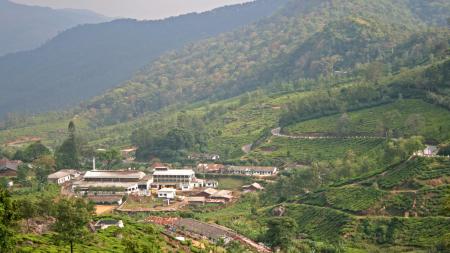 Traveller's Delight: Munnar