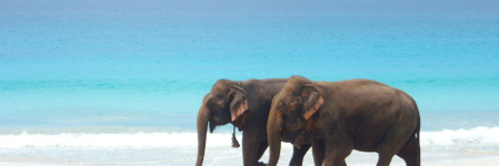 Andaman and Nicobar- Relish the most alluring beaches