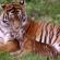 Jim Corbett National Park A Jungle to Discover